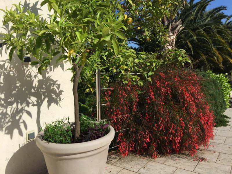 Cr ation et entretien de jardins for Produit entretien jardin